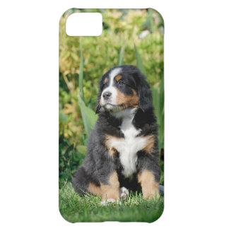 Bernese Mountain Dog puppy Case For iPhone 5C
