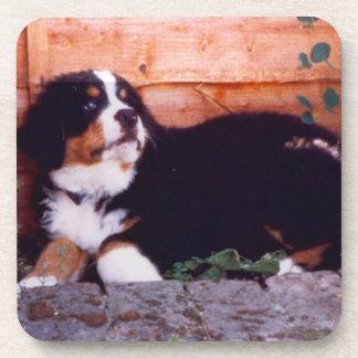 bernese mountain dog puppy cork coaster