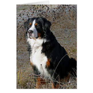 Bernese Mountain Dog Puppy Dog Note Card Greeting Cards