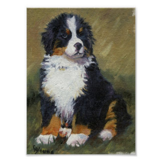 Bernese Mountain Dog Puppy Dog Portrait Poster