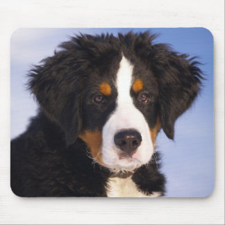 Bernese Mountain Dog Puppy Mouse Pad