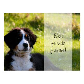 Bernese mountain dog puppy on green grass postcard