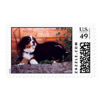 bernese mountain dog puppy postage stamps