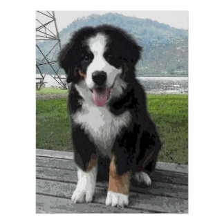 Bernese Mountain Dog Puppy Print