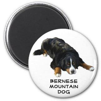 Bernese Mountain Dog Rug Pose Magnet
