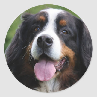 Bernese Mountain dog stickers, gift idea Classic Round Sticker