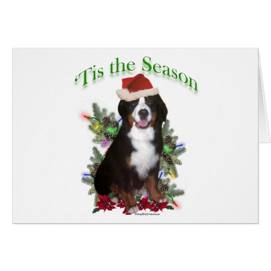 Bernese Mountain Dog 'Tis Card