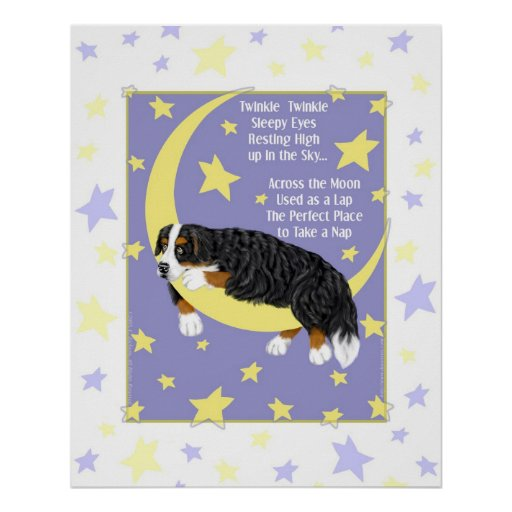 Bernese Mountain Dog Twinkle Poster