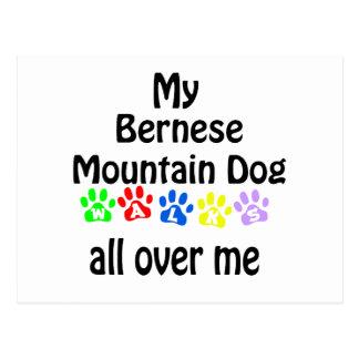 Bernese Mountain Dog Walks Design Postcard