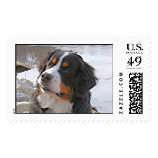 Bernese Mountain Dog Winter Jones - Customized Stamps