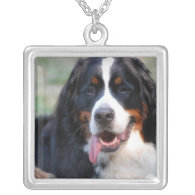 Bernese Mountain Dog with Big Tongue Necklace