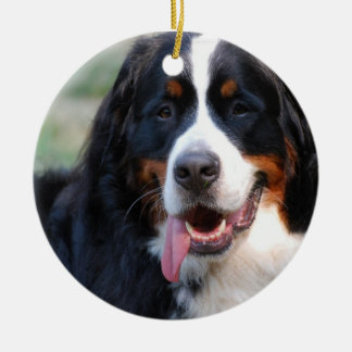 Bernese Mountain Dog with Big Tongue Ornaments