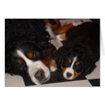 Bernese Mountain Dogs Adult & Pup Greeting Card