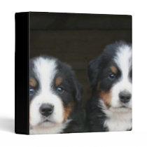Bernese mountain dogs binder