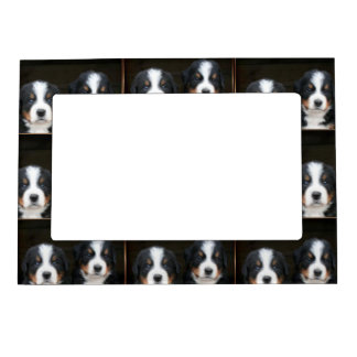 Bernese mountain dogs magnetic photo frames