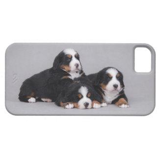Bernese Mountain iPhone SE/5/5s Case
