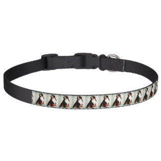 Bernese Mountain Pet Collar