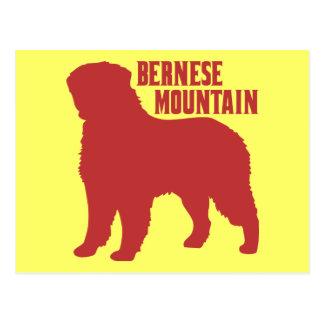 Bernese Mountain Postcard