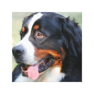 Bernese Mountain Puppy Canvas Print