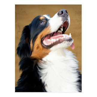 Bernese Mountain Puppy Dog Blank Postcard