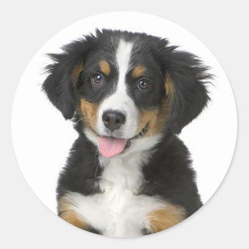 Bernese Mountain Dog Puppy Supplies