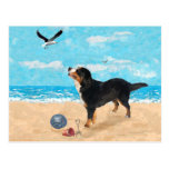 Bernese Mt. Dog at the Beach Post Cards