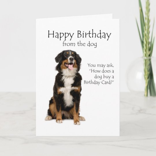 Bernese Mt Dog Birthday Card Zazzle