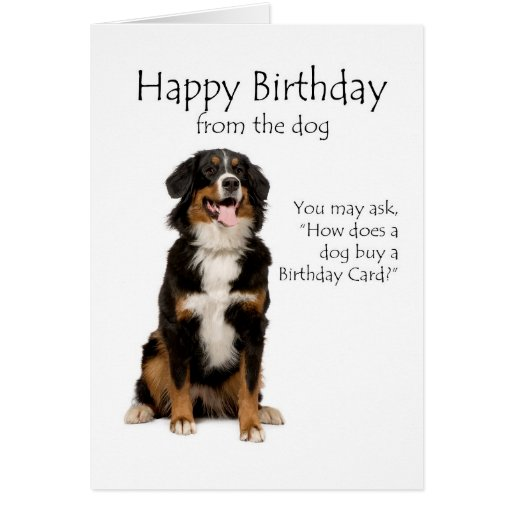 Bernese Mountain Dog Greeting Cards – Dog Birthday Card