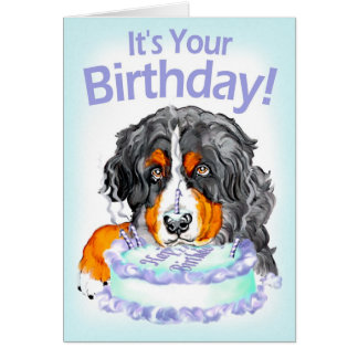 Bernese Mt Dog Cake Face Birthday Card