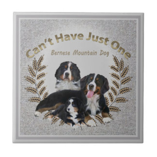 Bernese Mt. Dog Can't Have Just One Ceramic Tile