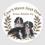 Bernese Mt. Dog Can't Have Just One Classic Round Sticker