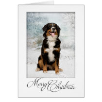 Bernese Mt. Dog Christmas Card