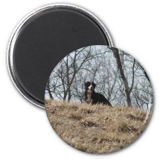 Bernese Mt. Dog Magnet