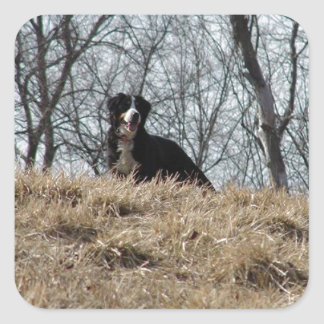 Bernese Mt. Dog Square Sticker