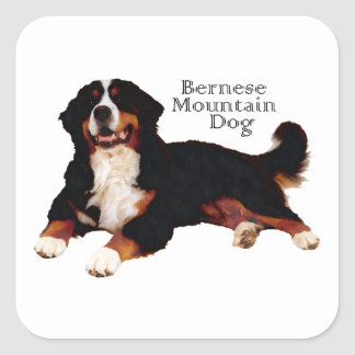 BERNESE Mt. Dog Square Sticker