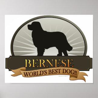 Bernese Poster