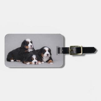 Bernese puppies bag tag