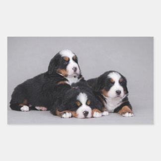 Bernese puppies rectangular sticker