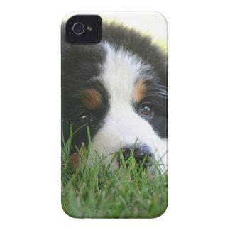Bernese Puppy Case-Mate iPhone 4 Cases