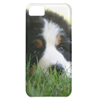 Bernese Puppy Case For iPhone 5C