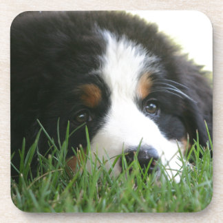 Bernese Puppy Drink Coaster