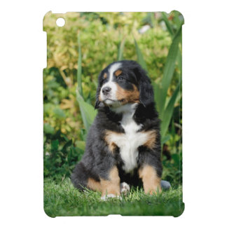 Bernese puppy iPad mini cases