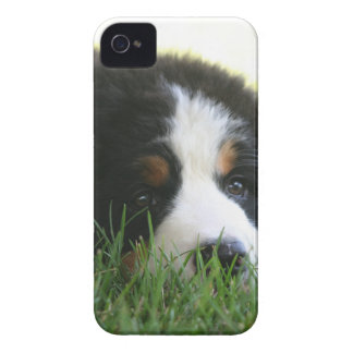 Bernese Puppy iPhone 4 Cover