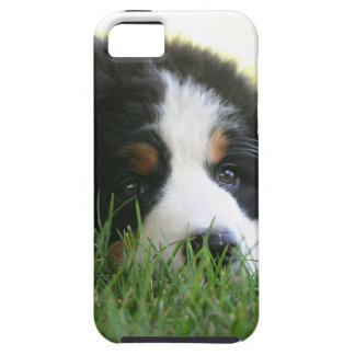 Bernese Puppy iPhone SE/5/5s Case