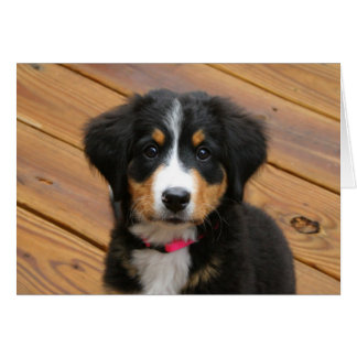 Bernese Puppy Note Cards