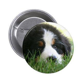Bernese Puppy Pinback Button
