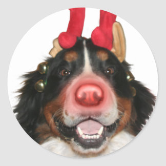 Bernese Roodolph Classic Round Sticker