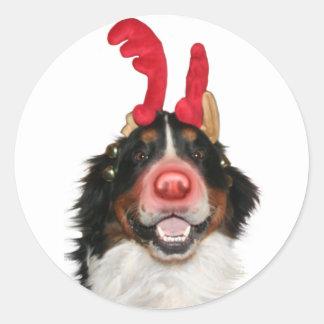 Bernese Roodolph (Rudolph) Classic Round Sticker