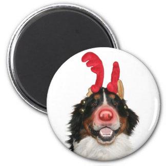Bernese Roodolph (Rudolph) Magnet