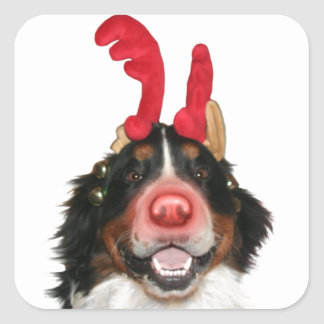Bernese Roodolph (Rudolph) Square Sticker